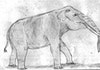 Gajah-Gajah Endemik Sulawesi yang Memiliki Tubuh Tidak Lazim