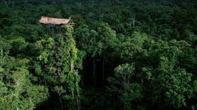 Mengintip Kebiasaan Suku Korowai, Pemilik Rumah Pohon Tertinggi di Papua