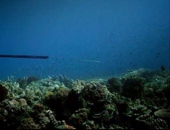 Mengenal Suku Bajo, Para Pemburu dan Penjaga Lautan Nusantara