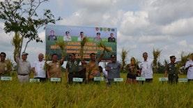 Kalimantan Timur Akan Swasembada Beras Tahun Ini