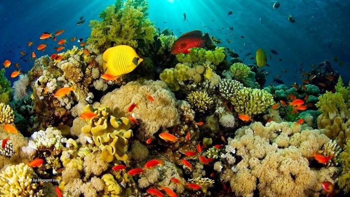 Keindahan Taman Bawah Laut Bunaken Indonesia
