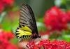 Taman Nasional ini Wajib dikunjungi Untuk Kamu Para Pecinta Kupu-kupu