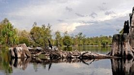 Sensasi Sebangau, Wisata Air Nuansa Gambut