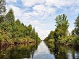 Gambar sampul Ada Apa dengan Sungai Hitam di Sebangau?