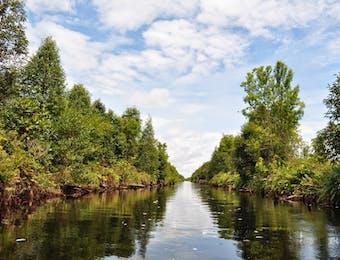 Ada Apa dengan Sungai Hitam di Sebangau?