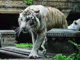 Gambar sampul Taman Safari Terluas di Asia Tenggara Ada di Indonesia