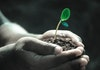 Mengulas Fungsi Tanah Bagi Tumbuhan