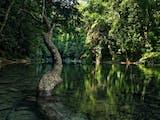 Gambar sampul Pemuda Aceh Cari Solusi Lindungi Kelestarian Hutan, Begini Caranya