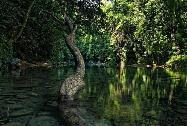 Pemuda Aceh Cari Solusi Lindungi Kelestarian Hutan, Begini Caranya