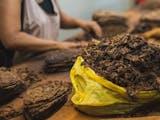 Gambar sampul Awal Mula Kehadiran Tembakau, Si 'Emas Hijau' Indonesia