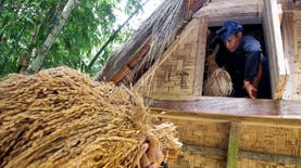 Daerah Ini Dipersiapkan Untuk Jadi Lumbung Padi Organik Nasional