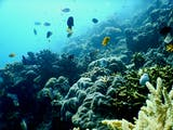 Gambar sampul Saat Laut dijaga dengan Muro, Ikan-Ikan pun Datang Kembali ke Lamatokan
