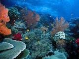 Gambar sampul Sekaya Apa Sih Karang di Perairan Raja Ampat?
