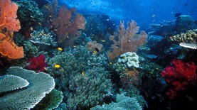Sekaya Apa Sih Karang di Perairan Raja Ampat?