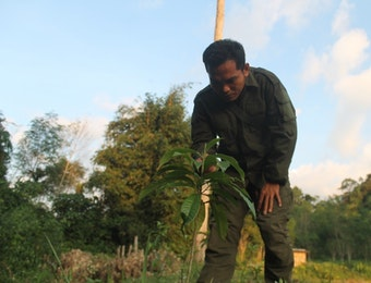 Para Penjaga Hutan Desa Rio Kemuyang