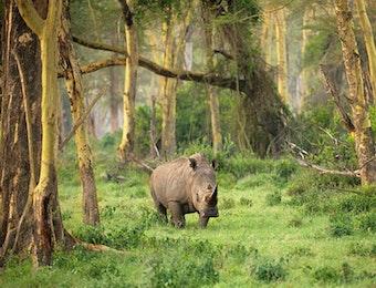 Melihat Upaya Mayarakat Cilubang Mengurangi Ketergantungan di Habitat Badak Jawa