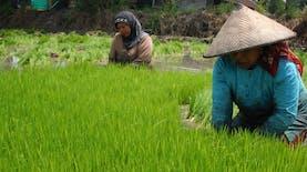 Permudah Petani Jual Hasil Panen, 1000 Toko Tani Bakal Dibuka