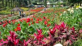 5 Tempat Wisata Terpopuler Di Kota Tomohon