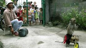 Menuju Indonesia Bebas Topeng Monyet di Tahun 2020