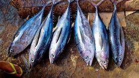 Sertifikasi Oleh Kementerian Jaga Kualitas Ekspor Ikan Indonesia