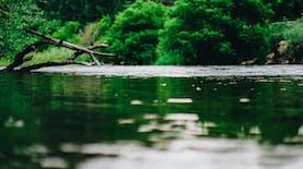 Ada Katak Bertanduk Jenis Baru Ditemukan di Kalimantan. Ini Faktanya!