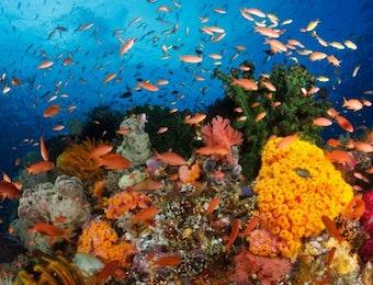 Dua Spesies Ikan Indonesia ini Mampu Membuat Dunia Terkejut