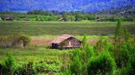 Tidak Hanya Hewan, Rumah Khas Suku Arfak pun Berkaki Seribu