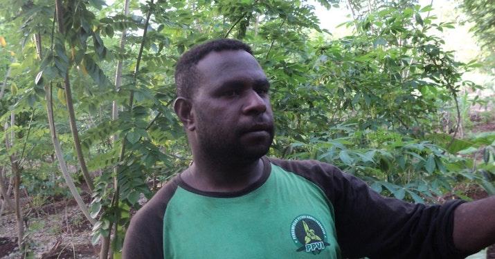 Budidaya Vanili Organik di Sota ala Petrus Ndiken
