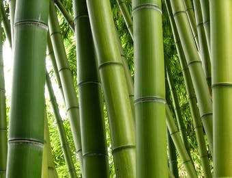 Inovasi Unik dari Serat Bambu