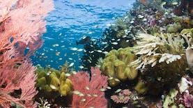 Panen, Indonesia Sabet ASEAN Heritage Parks (AHP) ke-39 dan ke-40 Sekaligus!