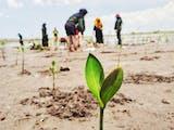 Refleksi Hari Pahlawan, Berbagai Komunitas Menanam Mangrove