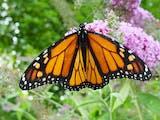 Inilah 19 Jenis Kupu-kupu Indonesia yang Langka dan Dilindungi