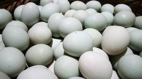 Sejarah Telur Asin, Oleh-Oleh Spesial Khas Brebes