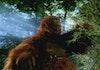 King Kong Purba Raksasa dari Jawa Utara