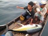 Gambar sampul Betapa Kayanya Laut Indonesia: Hanya Dengan Katinting, Tiga Tuna Ditangkap Dalam Sehari