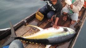 Betapa Kayanya Laut Indonesia: Hanya Dengan Katinting, Tiga Tuna Ditangkap Dalam Sehari