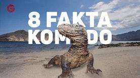 8 Fakta Mengenai Komodo