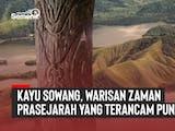 Gambar sampul Kayu Sowang, Warisan Zaman Prasejarah yang Terancam Punah