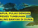 Gambar sampul Papua, Pulau dengan Spesies Tumbuhan Paling Banyak di Dunia