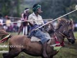 Pasola, Tradisi Tarung Kuda Masyarakat Sumba